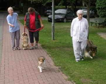 Unsere Hunde im Einsatz | Akademie für Therapie- und Behindertenbegleithunde in Kropp