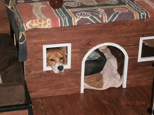 Snoopy | Akademie für Therapie- und Behindertenbegleithunde in Kropp